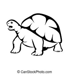 Turtle - Vector illustration : Turtle on a white background.