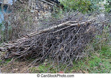 Brushwood branches in the garden