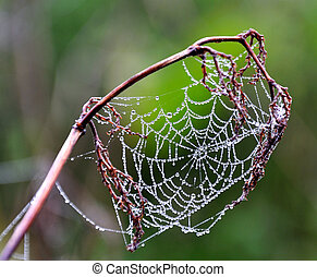 spiderweb with dew on green background
