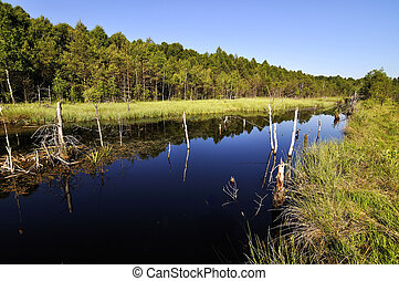 peat lake - morass in reservation Borkovicka blata