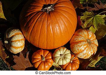 Autumn Pumpkins - Orange and white pumpkins create a...