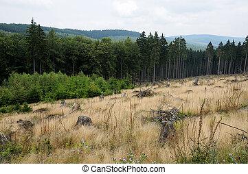 Drewna, łąki, Siegerland, Niemcy