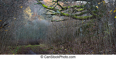 forest with oak tree  in autumn