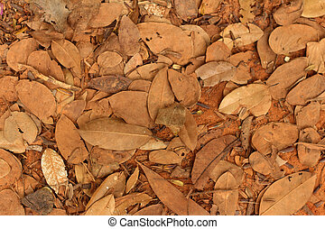 A background of leaves in the natur