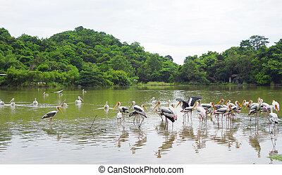marabou on a lake