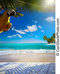 美しい, 芸術, 人が住んでいない, トロピカル, 海, カリブ海, 浜
