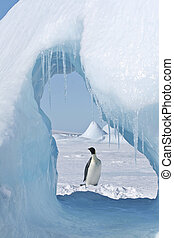 Emperor penguin Aptenodytes forsteri standing on the ice in...