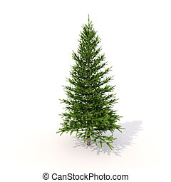 Spruce on white