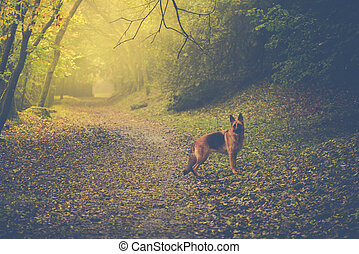 Dog in autumn forest with sun light and fog in background