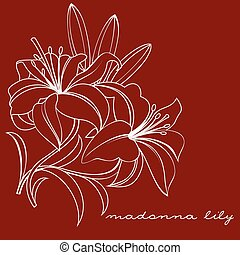madonna lily - white lily on a burgundy background vector...