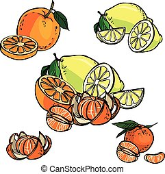 Vector icon set color citrus fruit  isolated on white background
