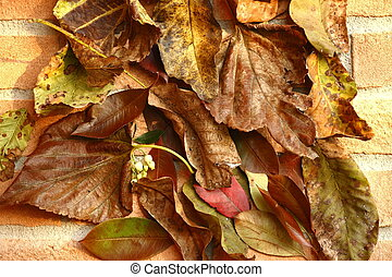 Autumnal leaves on new bricks