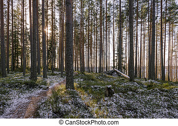 October in forest - Trekking path with first snow in...