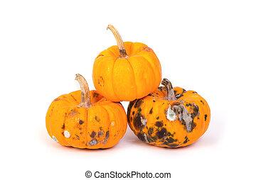 Closeup of  rotten pumpkin