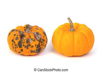 rotten  pumpkin and ripe  pumpkin