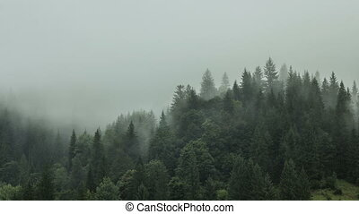 Timelapse of misty fog blowing over mountain with pine tree forest on a background