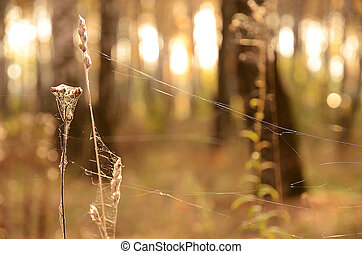 Indian summer. Cobweb on the dry grass, backlit