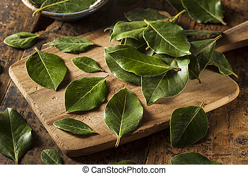 Green Organic Bay Leaves Ready to Use