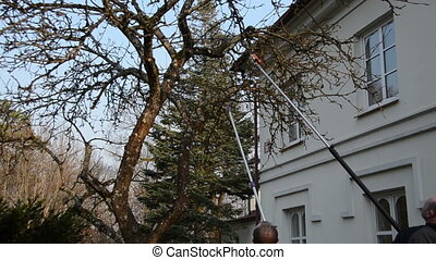 man saw fruit tree branch - Man cut apple fruit tree branch...
