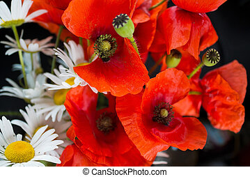 bouquet with wild poppies and daisies