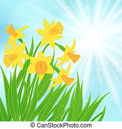 Spring card background with daffodils - Spring card...