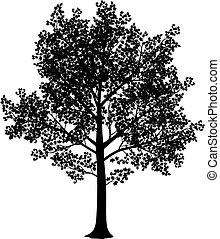 Maple silhouette - Vector black and white maple silhouette....