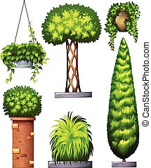 Different decorative plants - Illustration of the different...