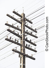 Telegraph pole - telegraph pole antenna's cable systems....