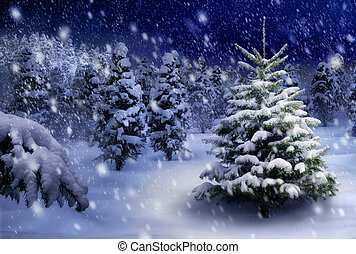 Fir tree in snowy night - Outdoor night shot of a nice fir...