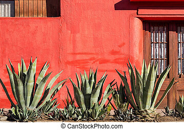 Red Wall and Plants - Old red wall with a row of agave...