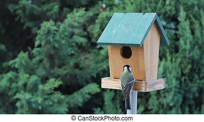 Birds Titmouse feeding