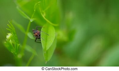 Ant in the grass on green leaf