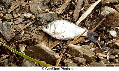 Small fish on the ground lost during loading