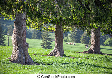 Trees on the meadow, Slovakia