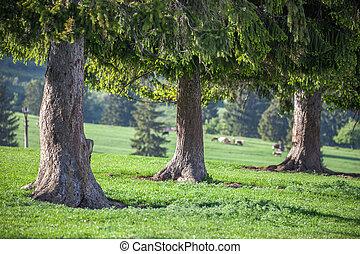 árboles, en, el, pradera, Eslovaquia,
