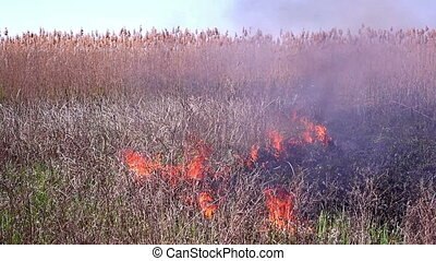 Fire in the steppes