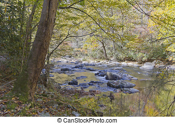 Autumn on the River - A colorful mountain river reflects...
