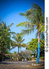 Pathway with palm tree to Samui Beach