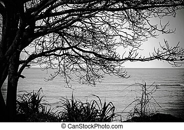Alone tree near the sea with sky in black and white colours