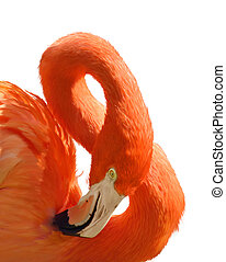Pink Flamingo Portrait - Digital Painting Of Pink Flamingo...