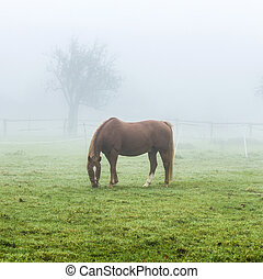 horses at the meadow in fog - horses at the green meadow in...