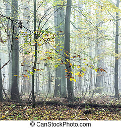 detail of trees in foggy forest - colorful detail of trees...