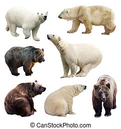 Set of bears over white
