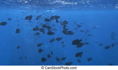 red sea snorkeling - amazing red sea