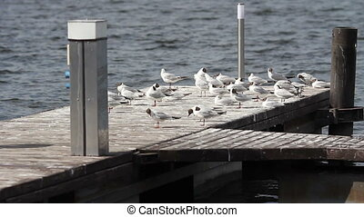 seagulls sitting on the dock near the river