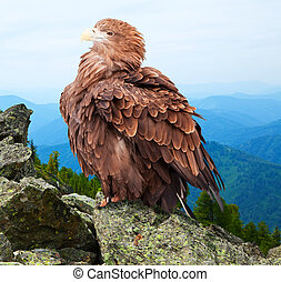 eagle against wildness background