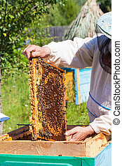 Bee-keeper holds in hand a frame with honey honeycombs and...