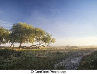 Beautiful diffused light on landscape with red deer stag on...