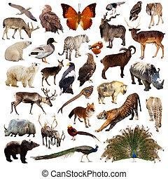 Conjunto, de, asiático, animals., aislado, en,...