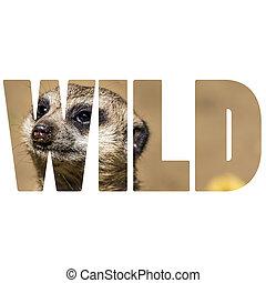 Word WILD over Meerkat
